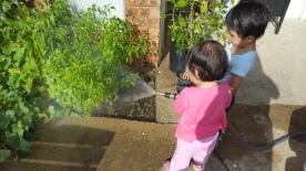 Gardening, watering plant